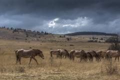chevaux-180 - copie.jpg